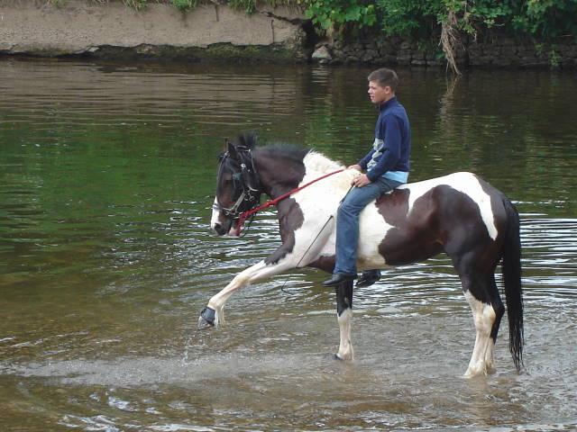 Appleby Horse