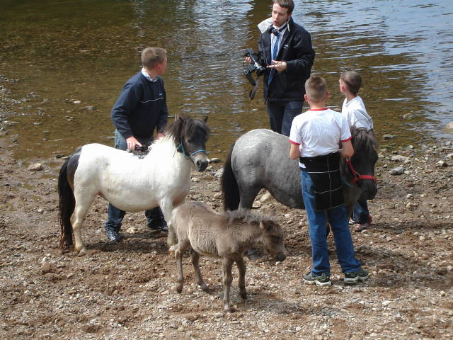Appleby horses
