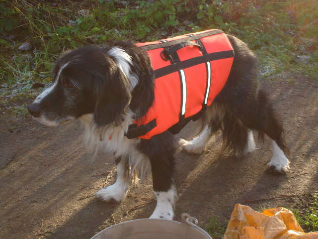 Roly in life vest