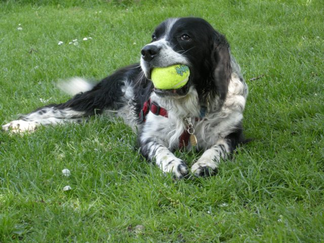 Jethro with ball in kennels